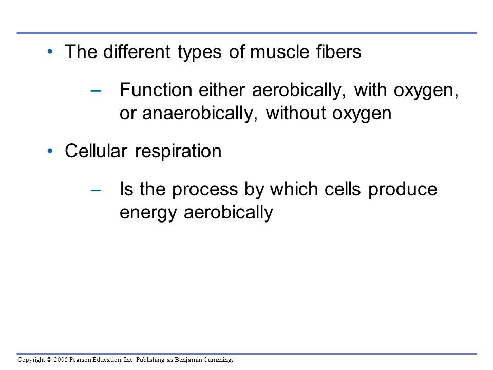 The different types of muscle fibers Function either aerobically, with oxygen, or anaerobically, without oxygen.