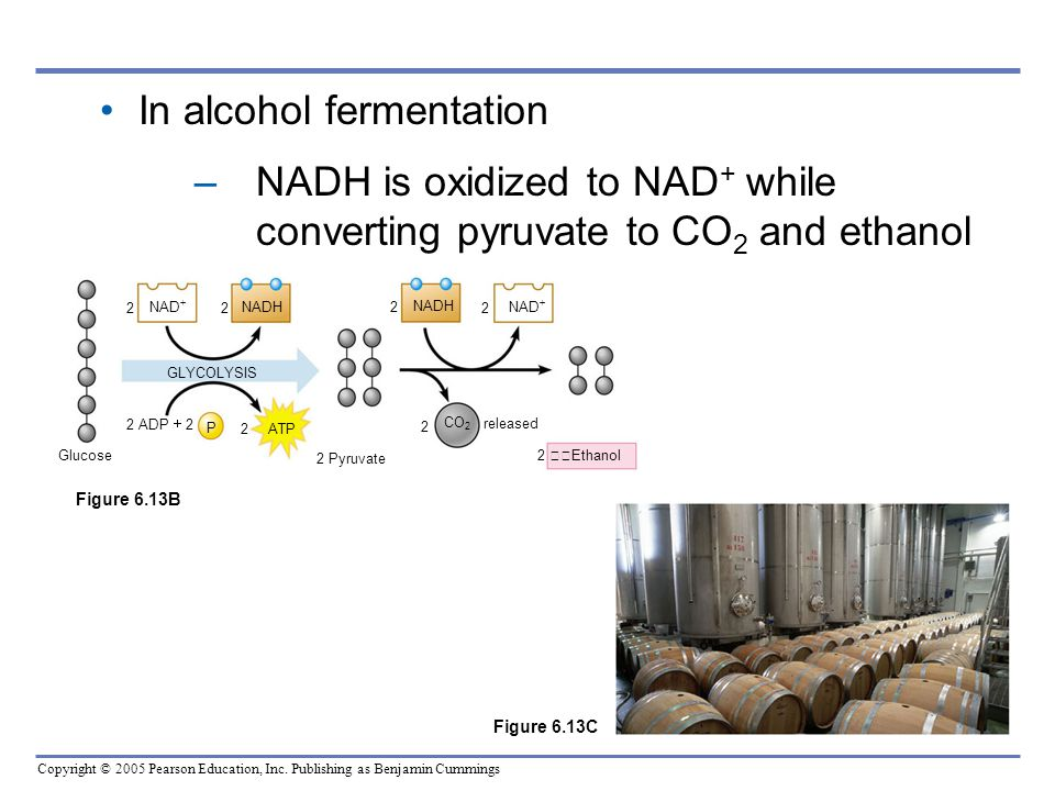 In alcohol fermentation