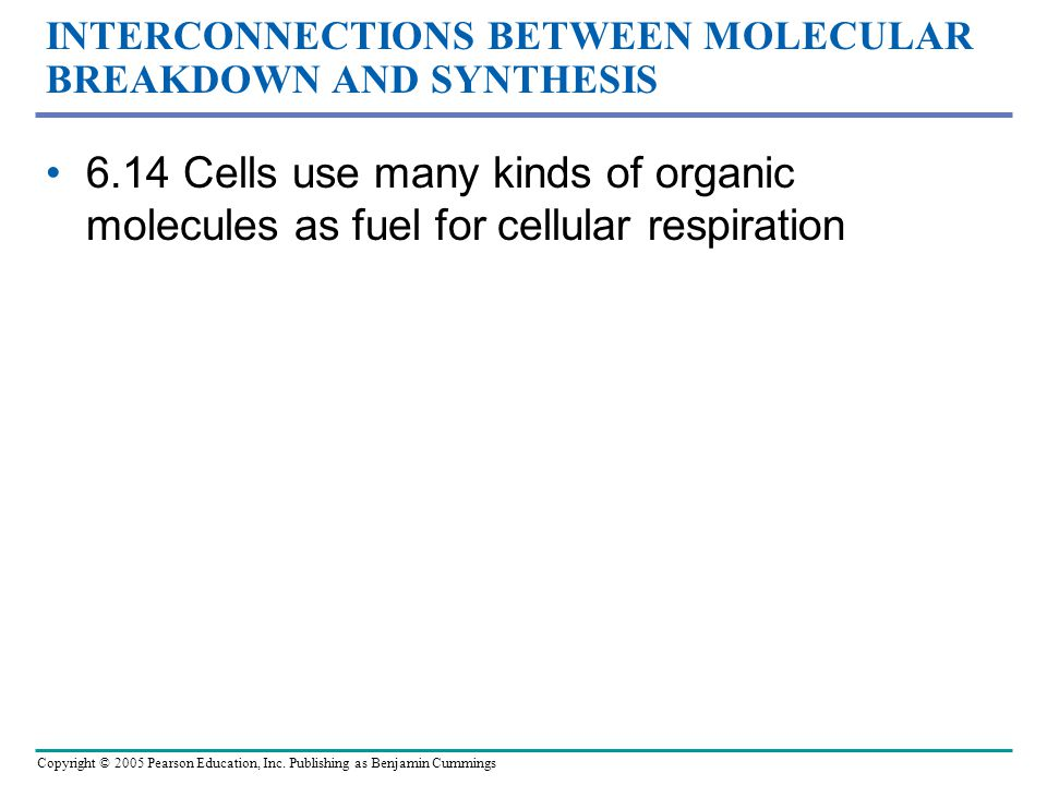 INTERCONNECTIONS BETWEEN MOLECULAR BREAKDOWN AND SYNTHESIS