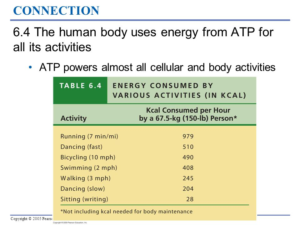 6.4 The human body uses energy from ATP for all its activities