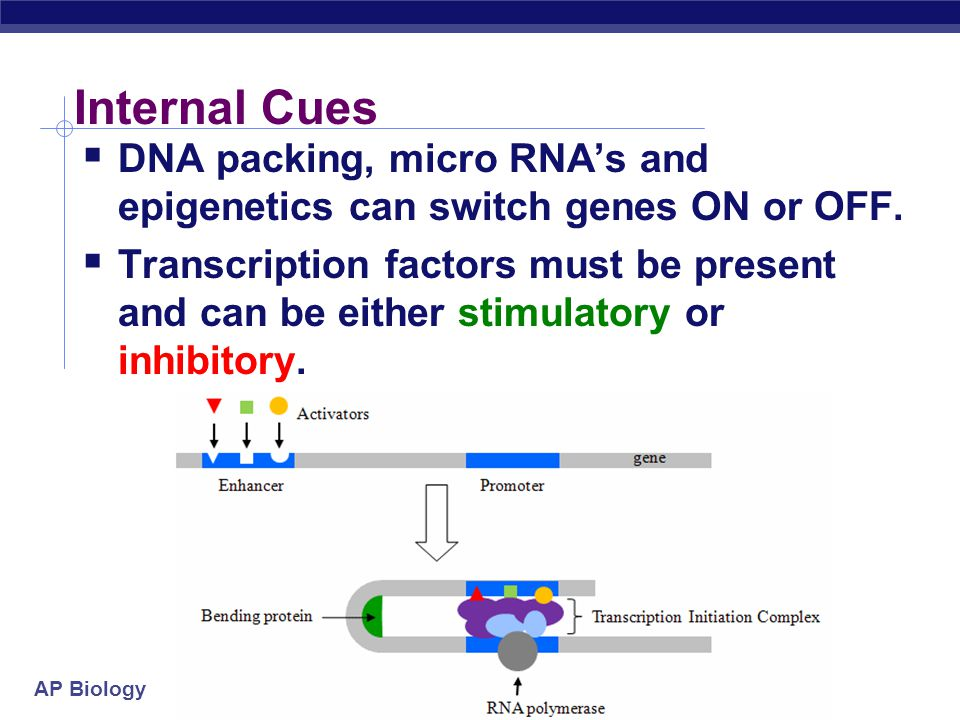 Internal Cues DNA packing, micro RNA's and epigenetics can switch genes ON or OFF.