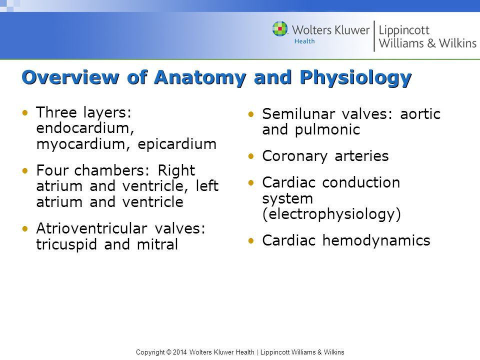 Contemporary Chapter 25 Anatomy And Physiology Picture Collection ...