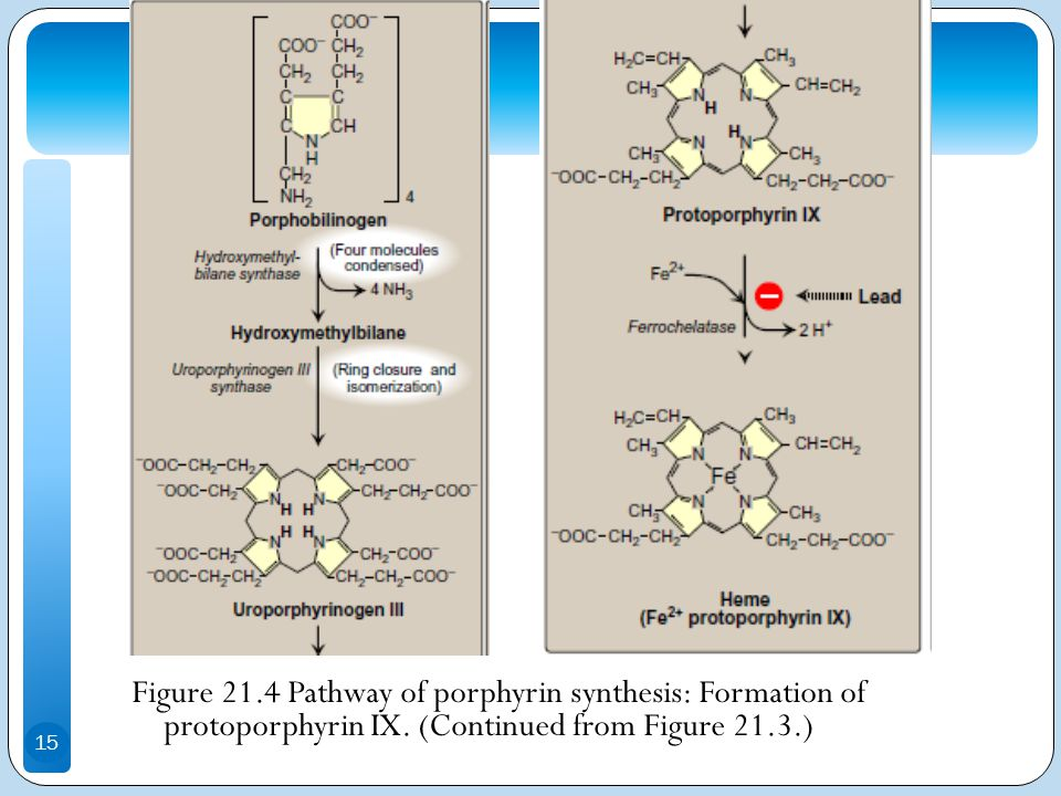 porphyrin synthesis The design and synthesis of functionalized porphyrins and their applications in  the design and synthesis of functionalized porphyrins  porphyrin synthesis 381.