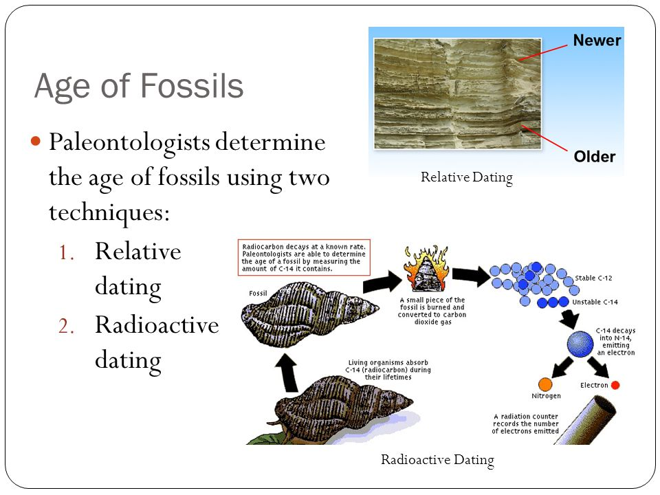 dating fossils with carbon Dating methods in science strata, fossils and age  carbon dating: an excellent  however the development of more precise dating methods, such as radiocarbon .
