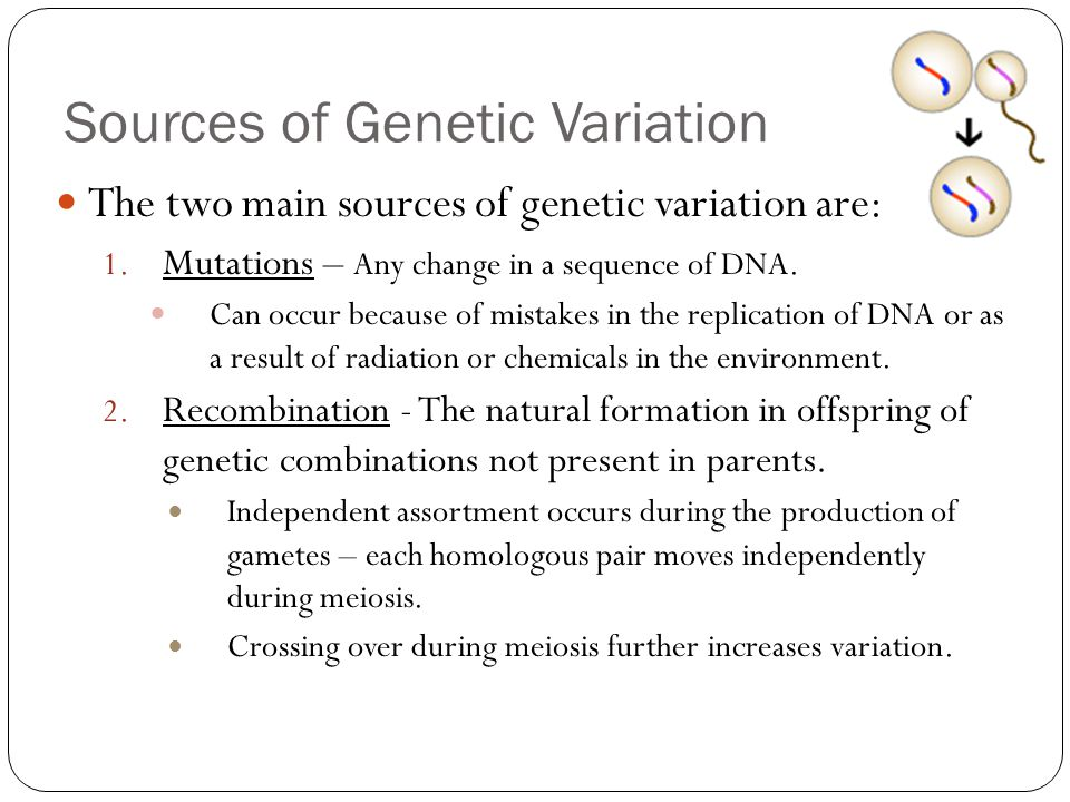 Crossing Over Definition >> Evolution and Adaptation Notes - ppt download