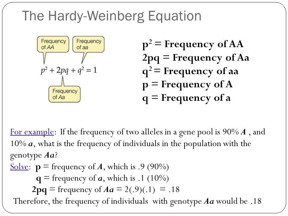 hardy weinberg equation worksheet and answers for high school. Black Bedroom Furniture Sets. Home Design Ideas