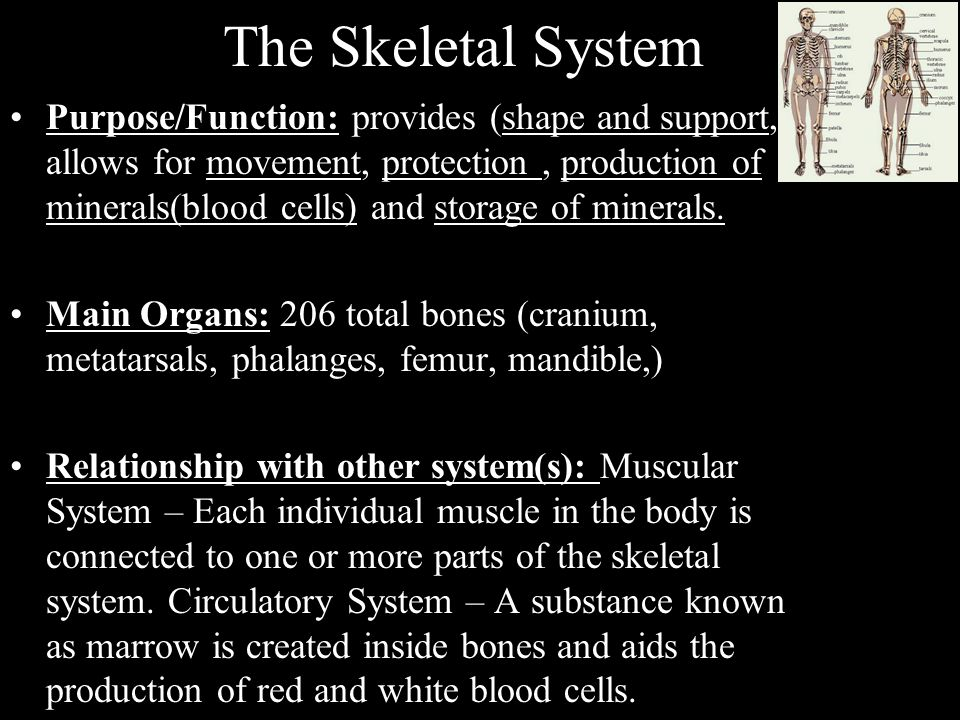 Skeletal System Works With Other Systems Keninamas