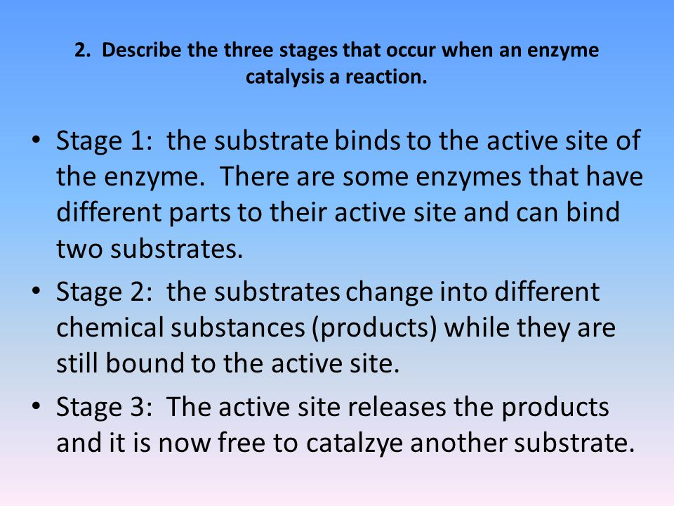 2. Describe the three stages that occur when an enzyme catalysis a reaction.