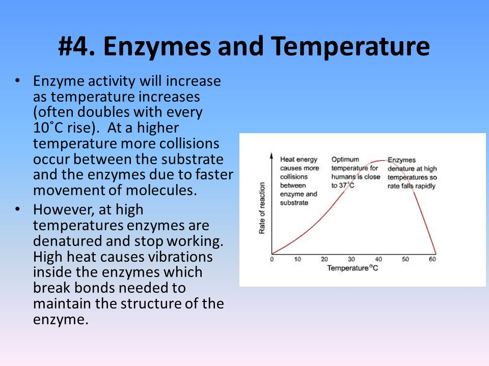 #4. Enzymes and Temperature