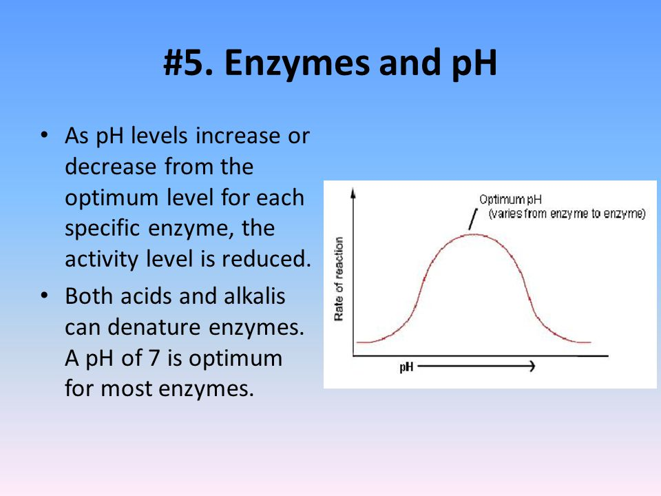 #5. Enzymes and pH As pH levels increase or decrease from the optimum level for each specific enzyme, the activity level is reduced.