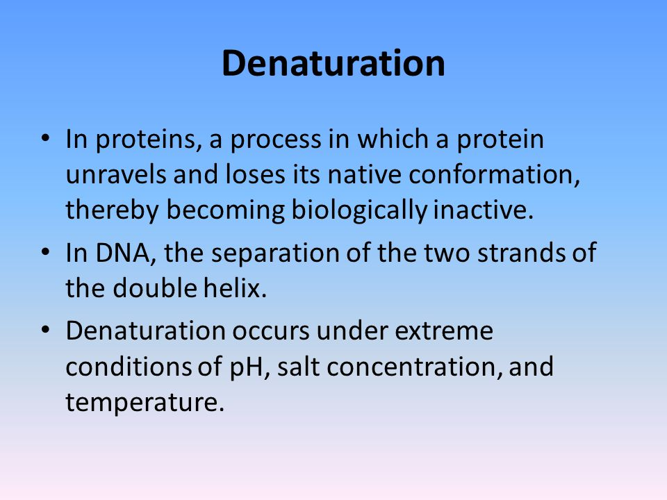Denaturation In proteins, a process in which a protein unravels and loses its native conformation, thereby becoming biologically inactive.
