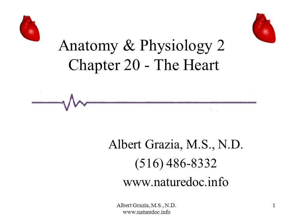 Anatomy & Physiology 2 Chapter 20 - The Heart - ppt video online ...