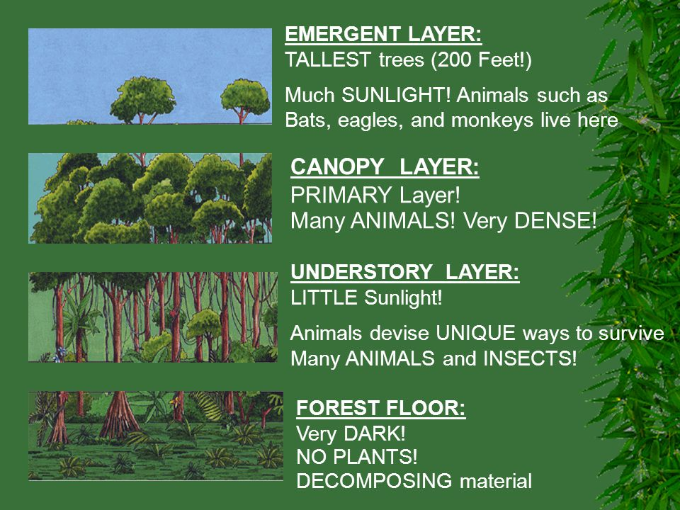 5 Many ANIMALS!  sc 1 st  SlidePlayer & FOREST BIOMES. - ppt video online download
