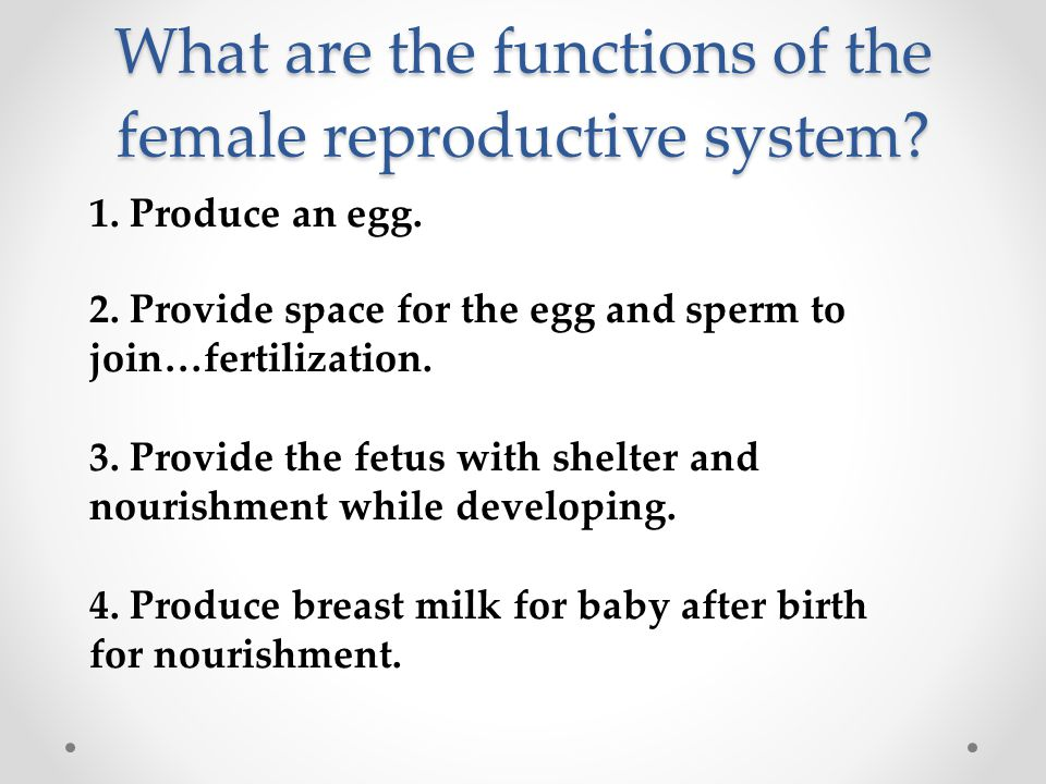 What are the functions of the female reproductive system