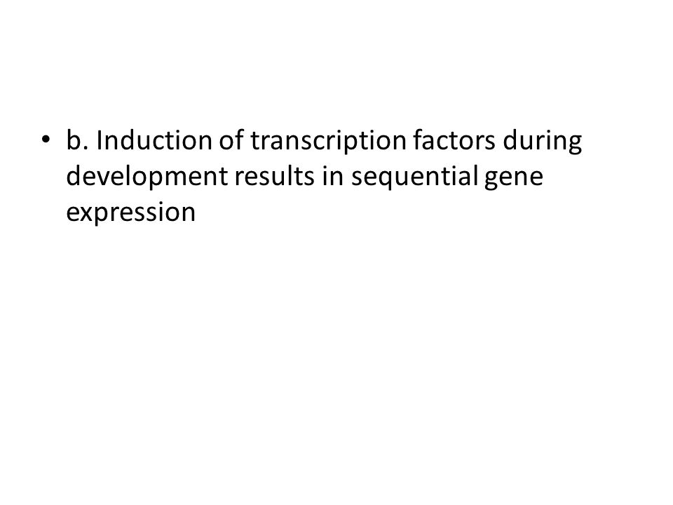 b. Induction of transcription factors during development results in sequential gene expression