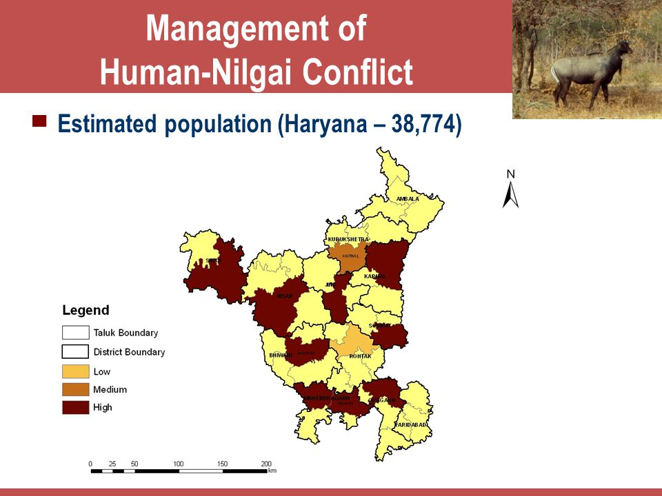 Management of Human-Nilgai Conflict