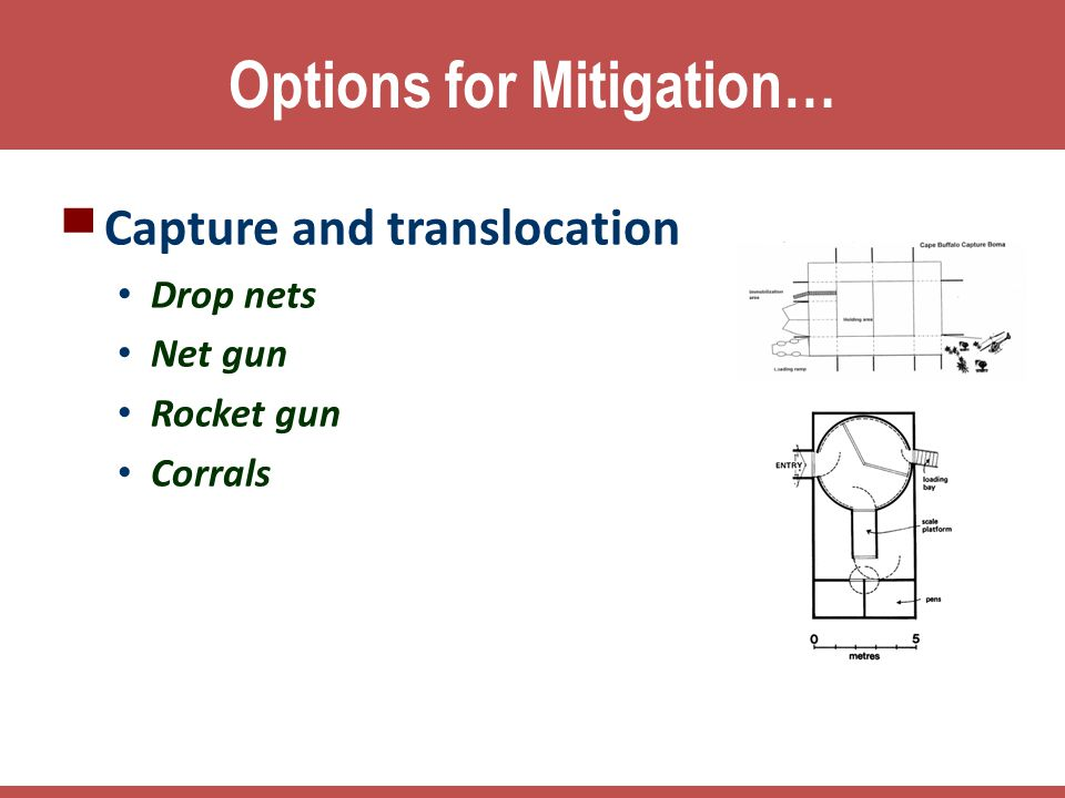 Options for Mitigation…