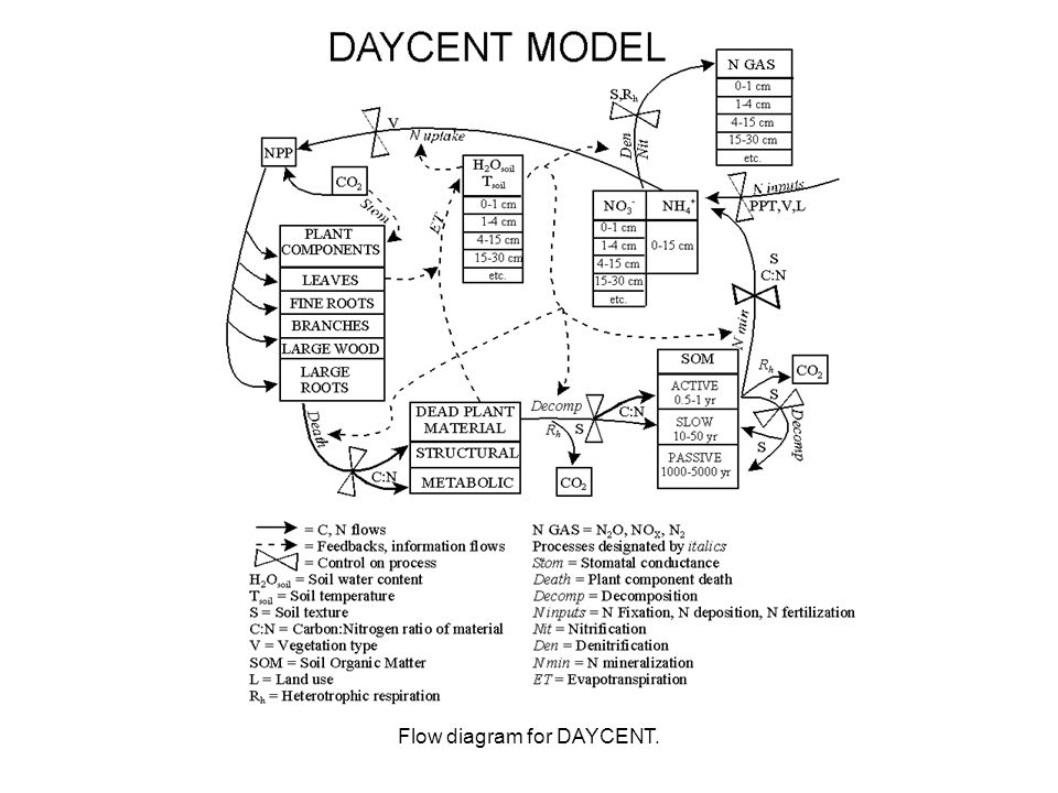 flow diagram for daycent