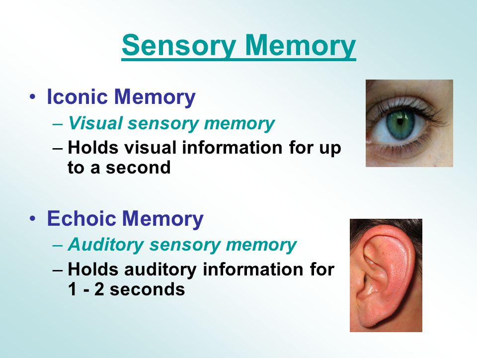 What Are Examples of Echoic Memory?