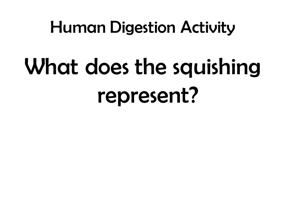 human digestion activity To reinforce students' understanding of the human digestion process, the functions of several stomach and small intestine fluids are analyzed, and the concept of simulation is introduced through a short, introductory demonstration of how these fluids work.