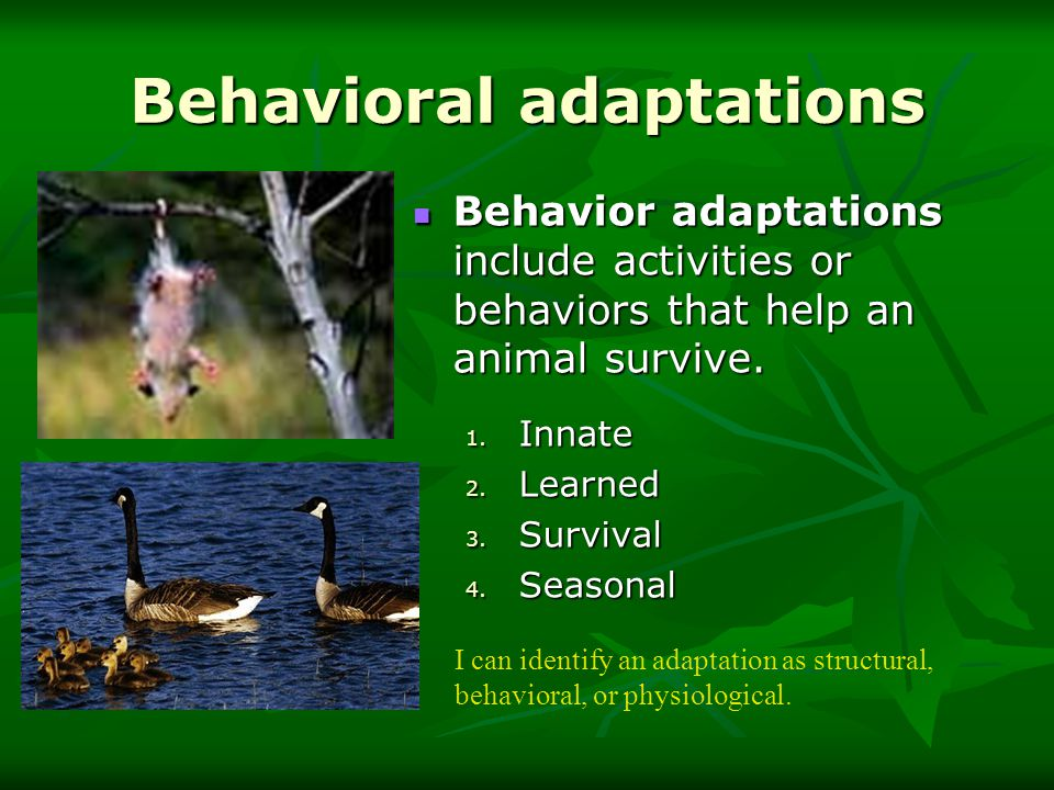 Adaptations. - ppt download