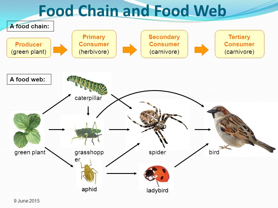 Consumers Make Up The Of The Food Chain
