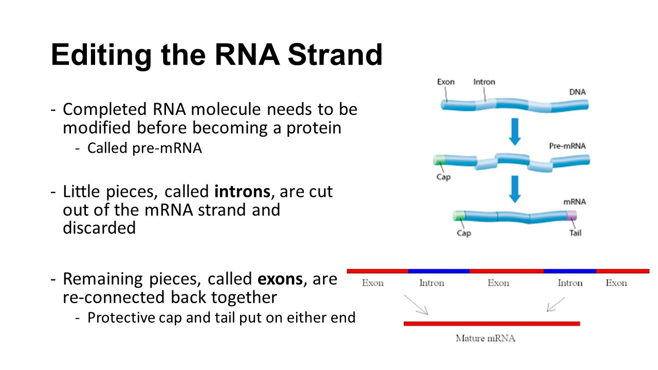 Ch 13 rna and protein synthesis College paper Help
