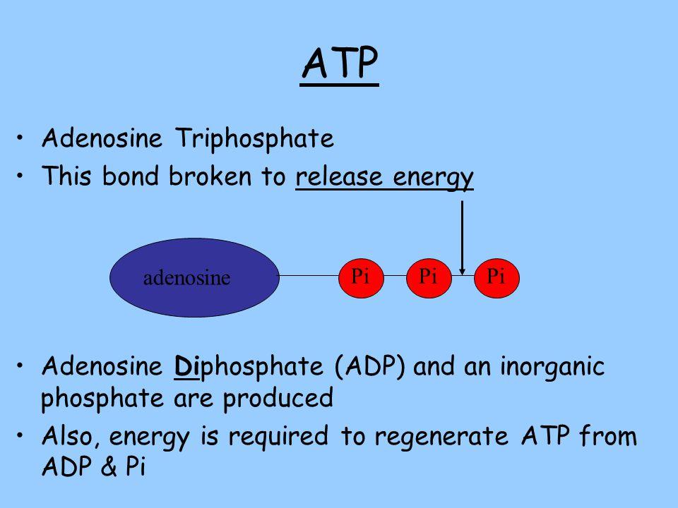 Inorganic Phosphate Cellular Respir...
