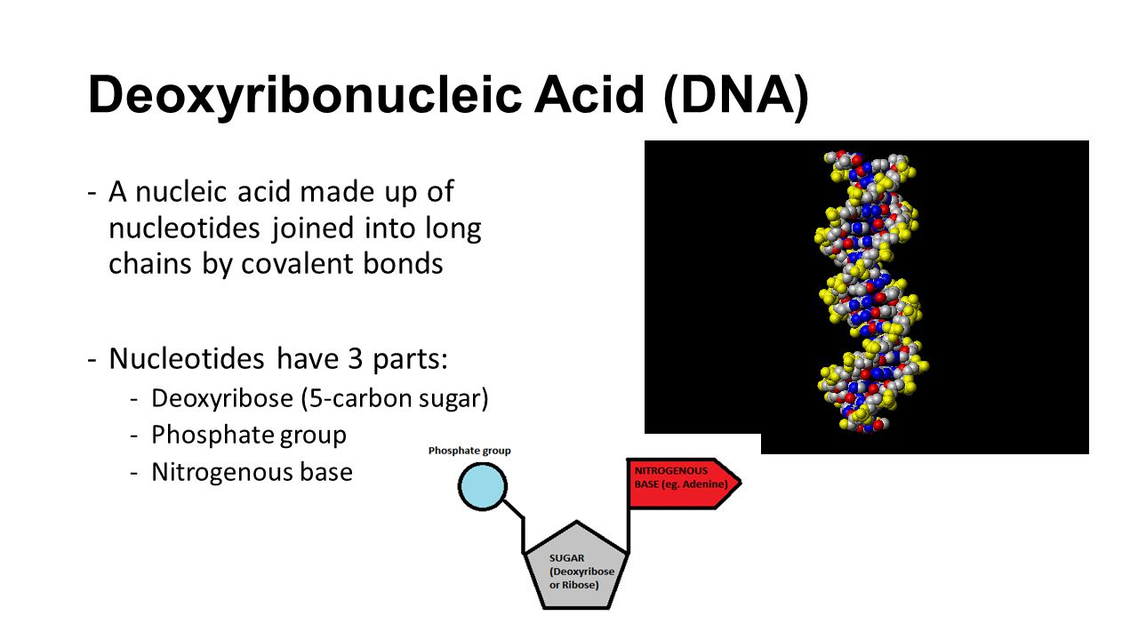 deoxyribonucleic acid how to say