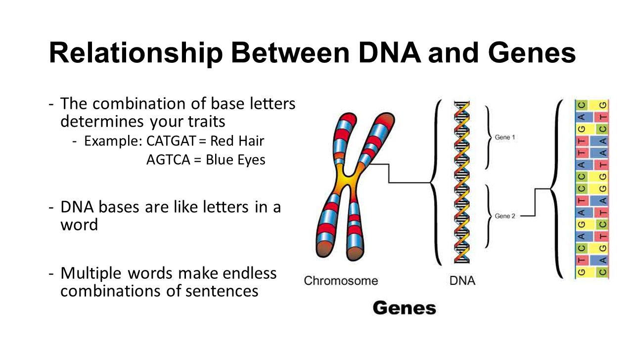 gene and dna relationship