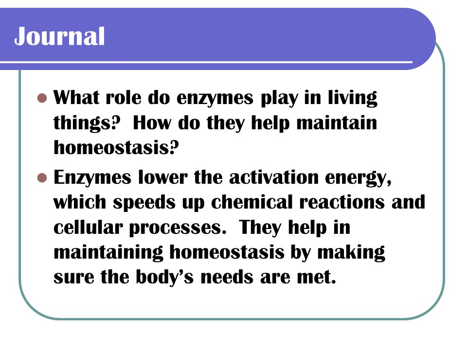 Journal What role do enzymes play in living things How do they help maintain homeostasis