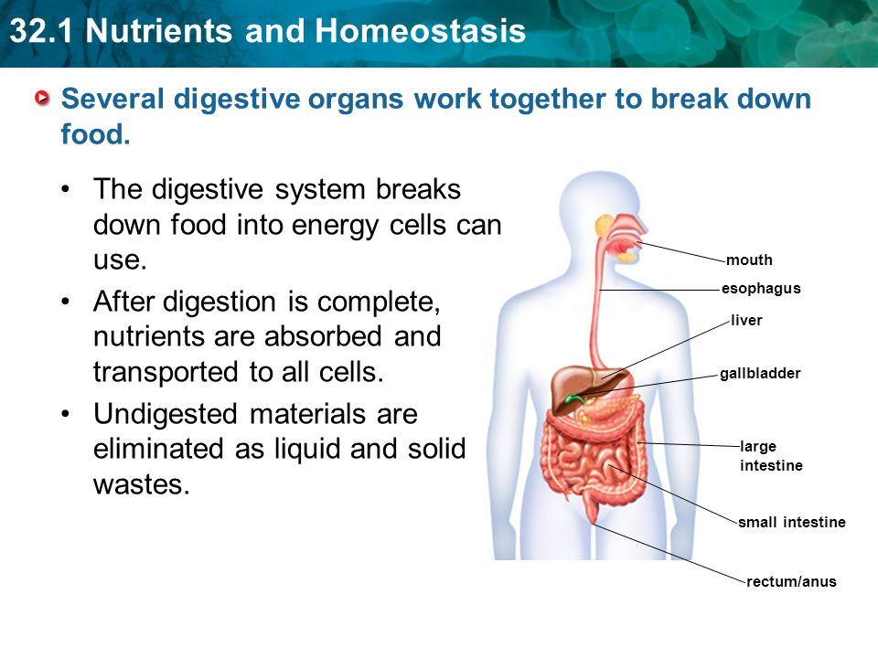 Where in the body does the digestion of fat take place?