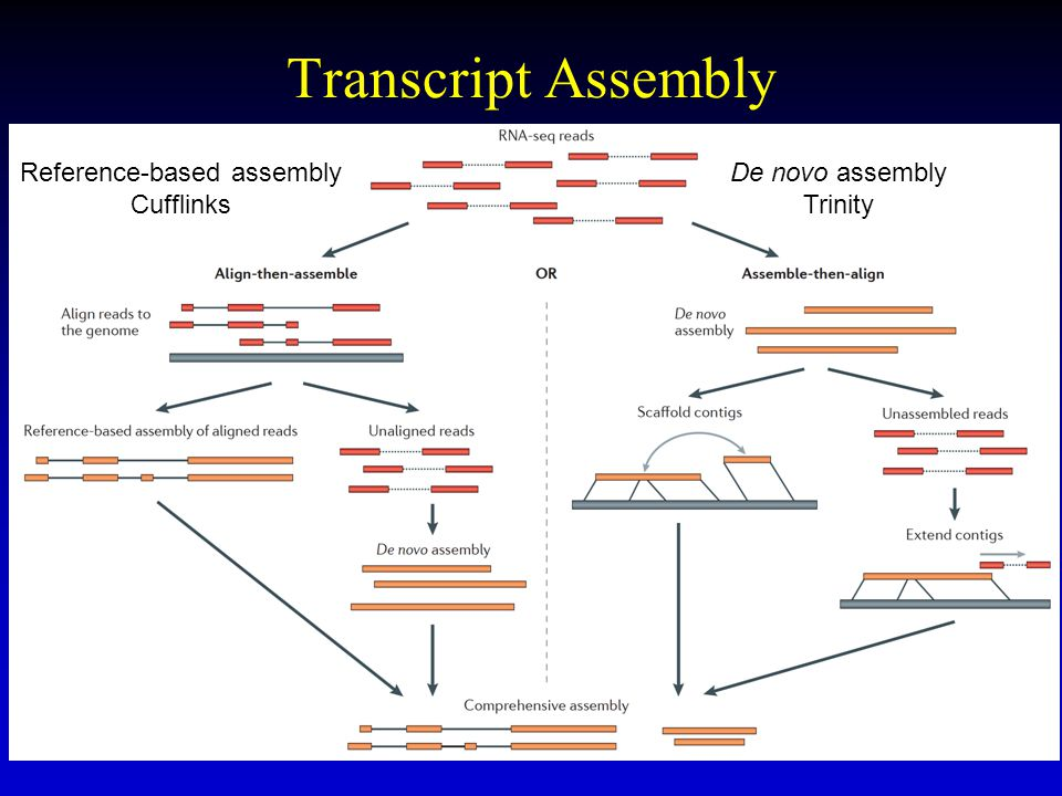Reference-based assembly