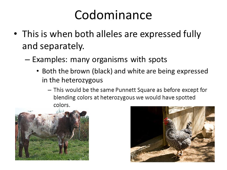 Incomplete Dominance Codominance And Sex Linked Traits