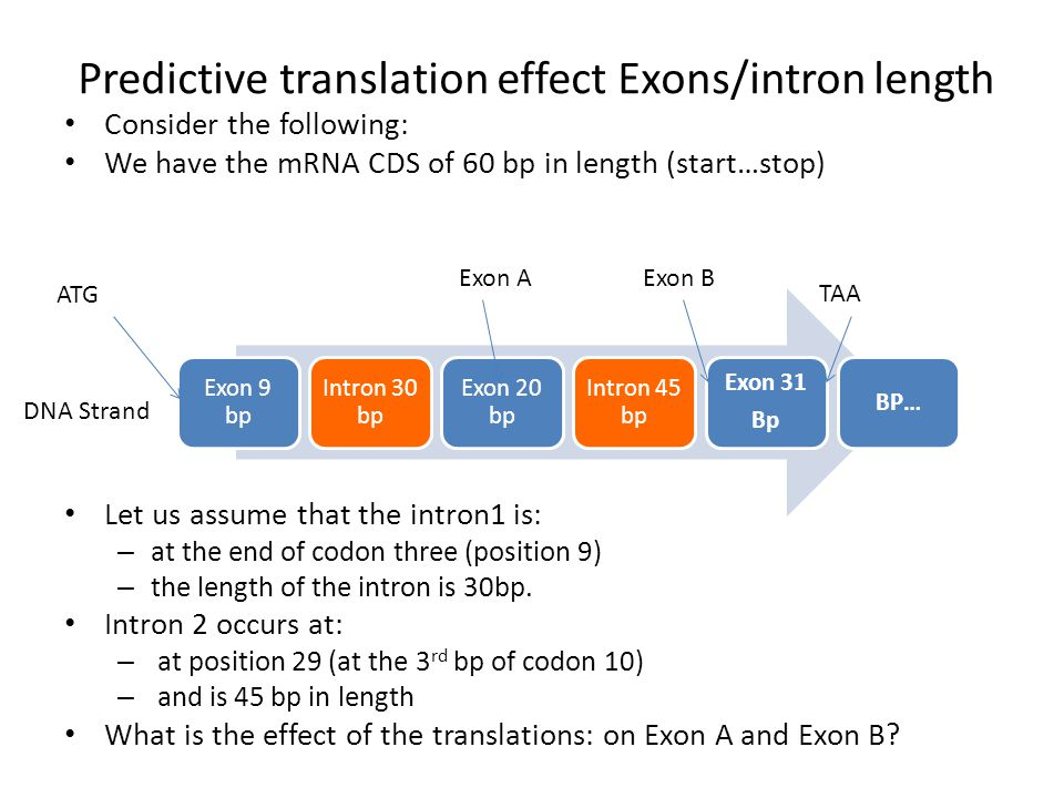 Predictive translation effect Exons/intron length