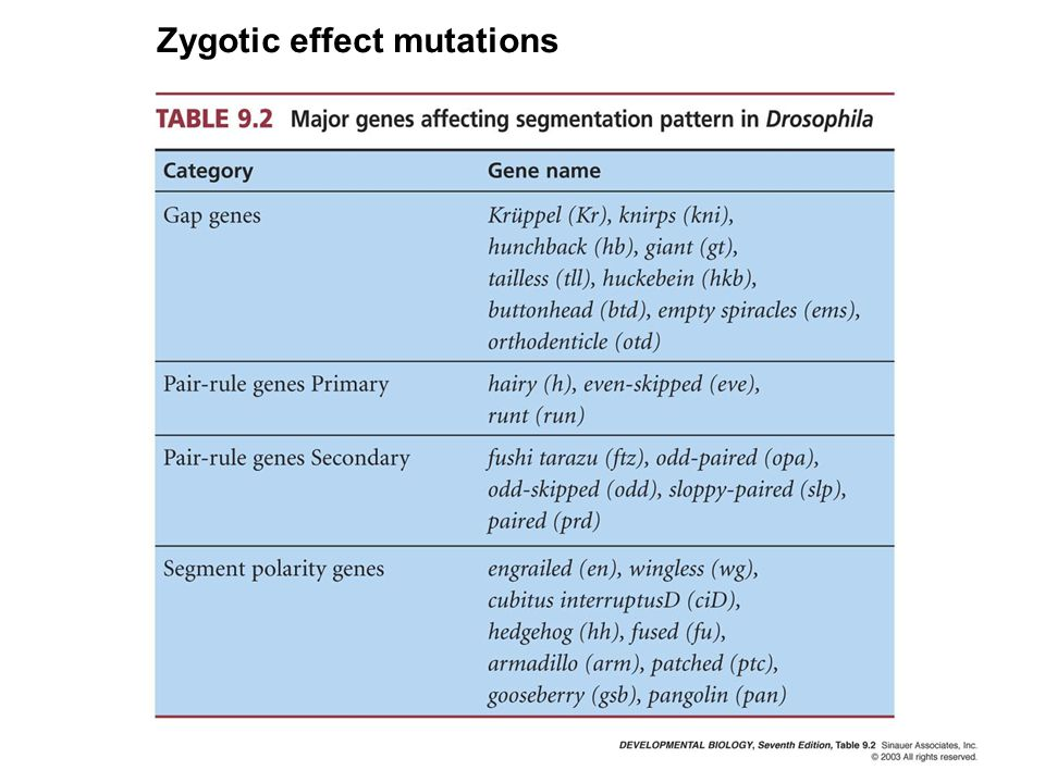 Zygotic effect mutations