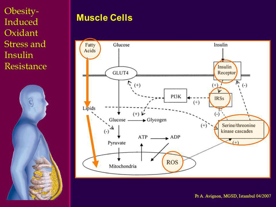 Obesity-Induced Oxidant Stress and Insulin Resistance