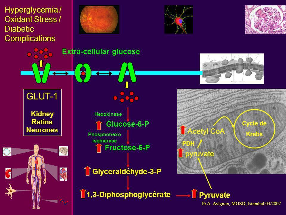 Hyperglycemia / Oxidant Stress / Diabetic Complications