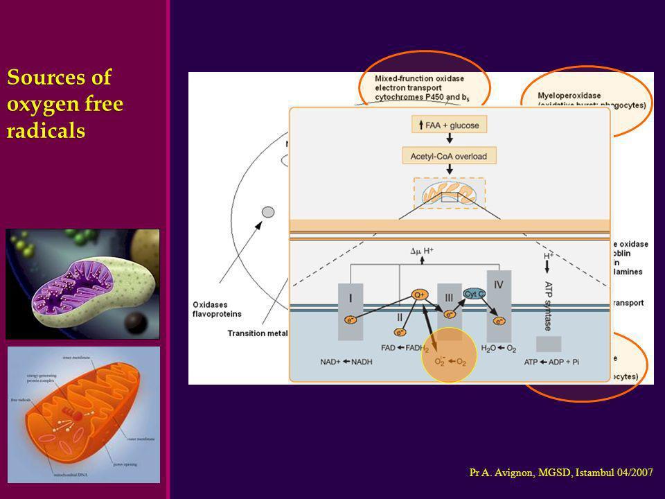 Sources of oxygen free radicals