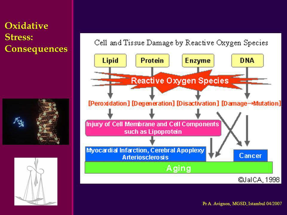 Oxidative Stress: Consequences