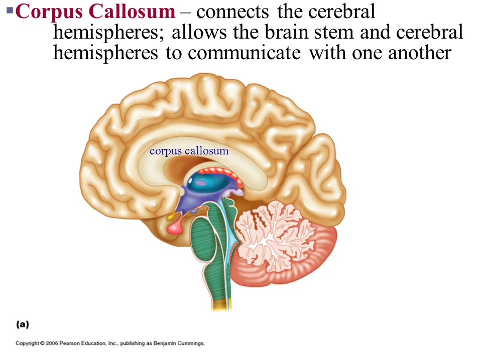 Part II Central Nervous System: Brain - ppt video online ...