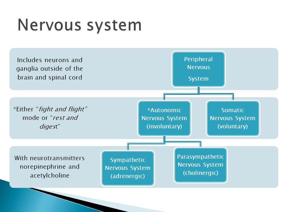 Human Nervous system Dr Abdolreza Najafi anaraki. - ppt ...