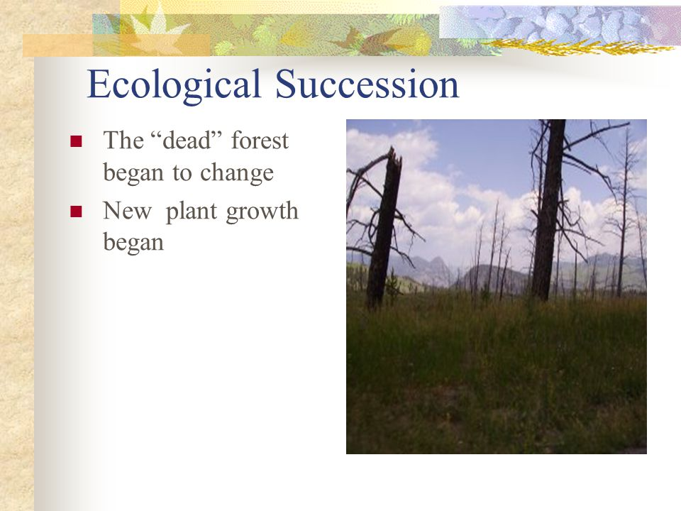 ecosystems ecological succession and climatic climax Ecological succession  ecosystems tend to  will form depends on climatic limitations ecological succession  the replacement of  climax community.