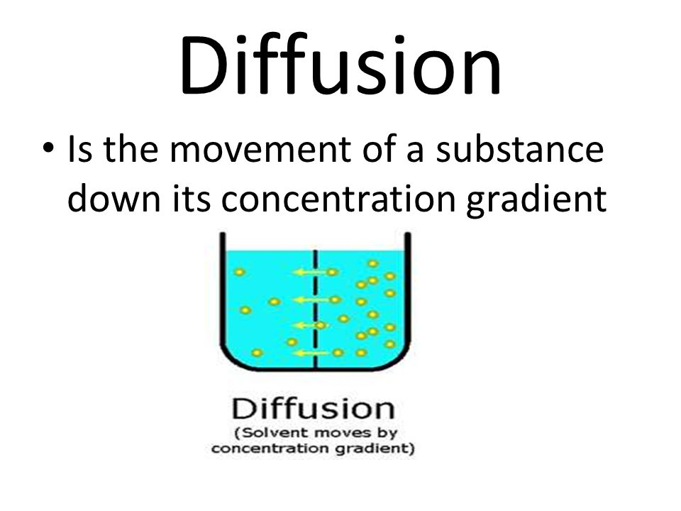 Diffusion Is the movement of a substance down its concentration gradient