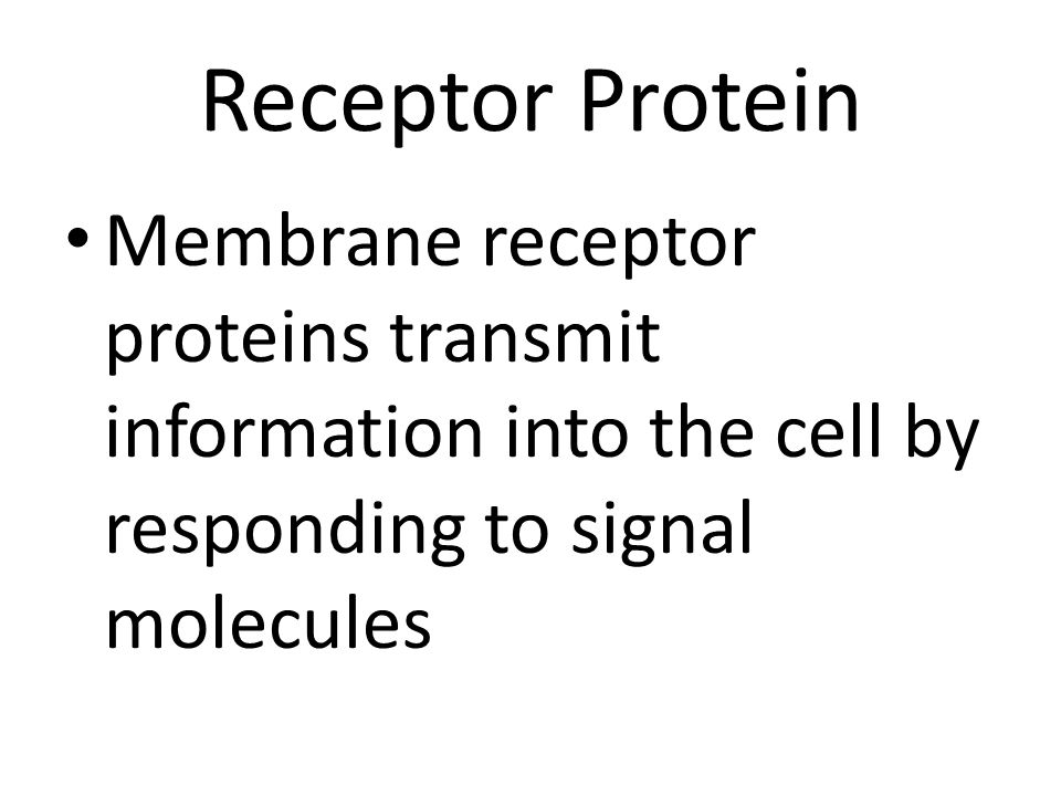 Receptor Protein Membrane receptor proteins transmit information into the cell by responding to signal molecules.