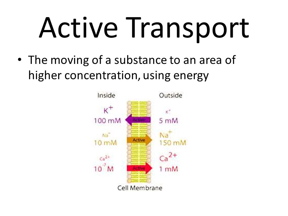 Active Transport The moving of a substance to an area of higher concentration, using energy