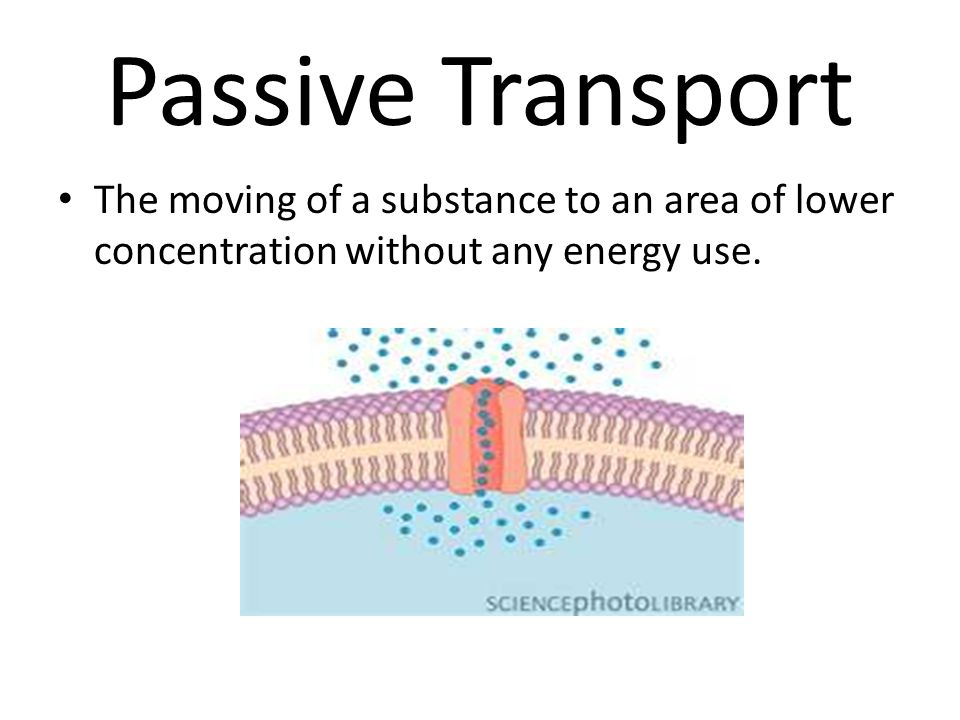 Passive Transport The moving of a substance to an area of lower concentration without any energy use.