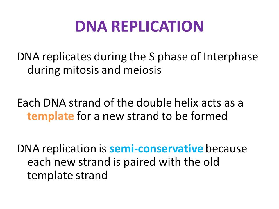 Molecular biology of the gene ppt video online download dna replication pronofoot35fo Images