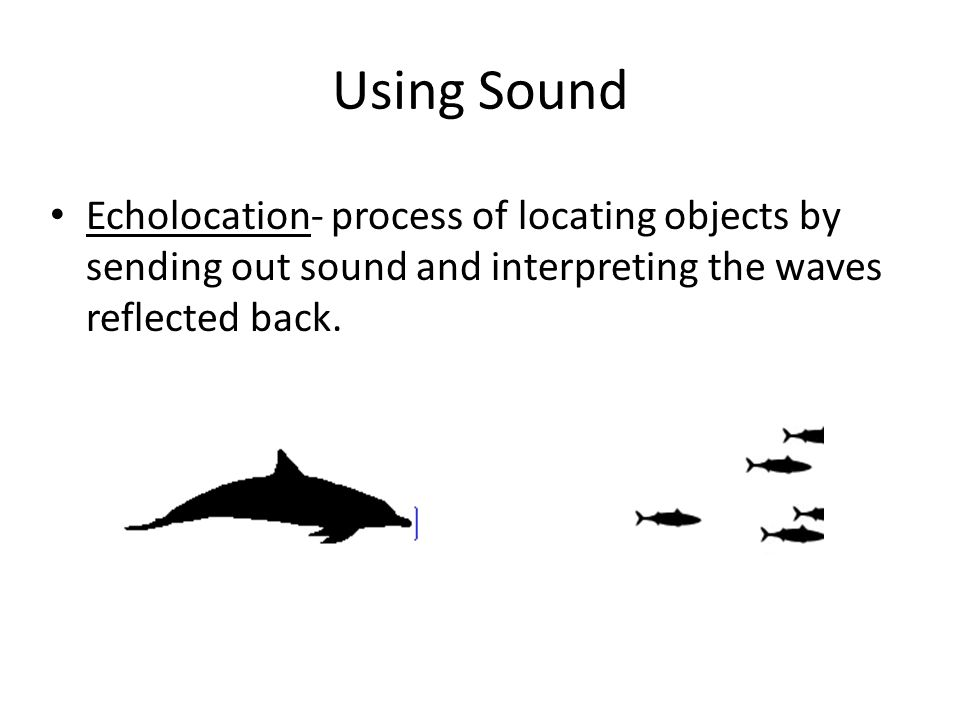 Using Sound Echolocation- process of locating objects by sending out sound and interpreting the waves reflected back.