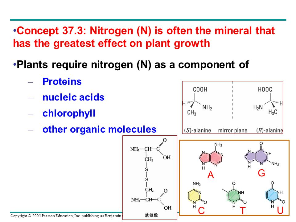 the role of chlorophyll in plant growth The effects of nutrient availability on plant growth and development  because of its role in chlorophyll synthesis,  (standard chlorophyll content) of the plant.